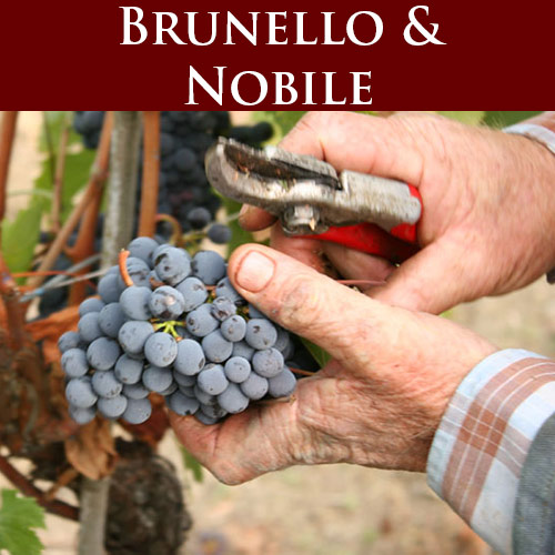 brunello di montalcino tour