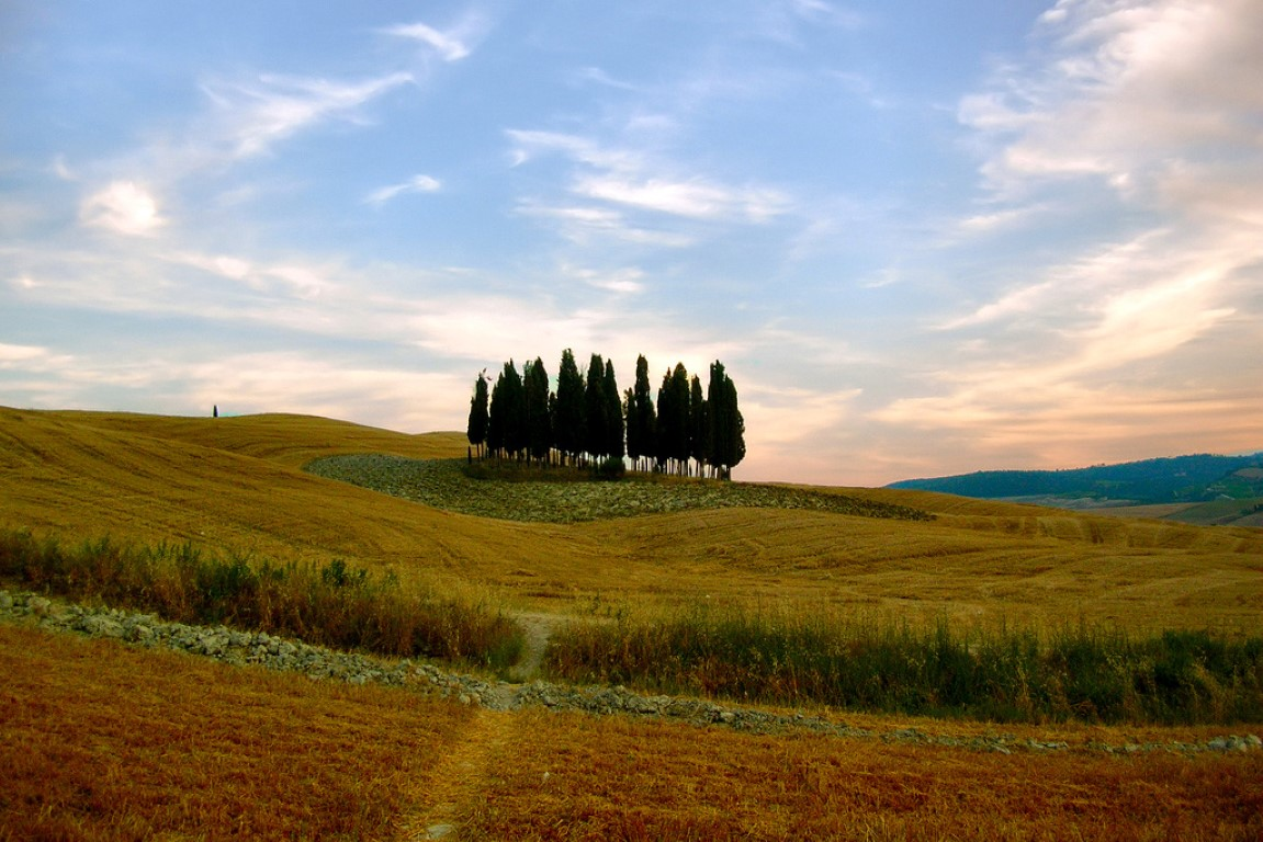 cypresses of val d'orcia