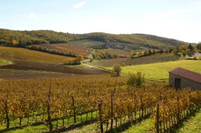 wineyards in chianti
